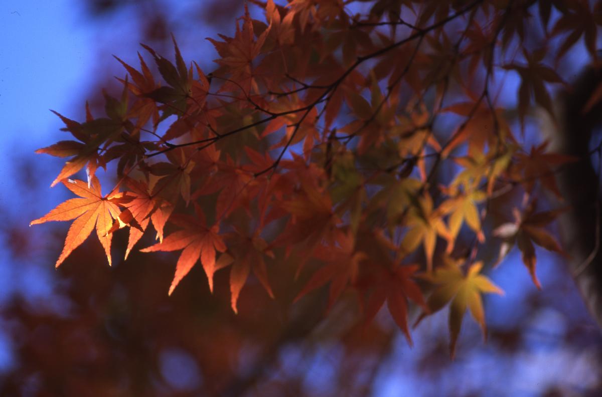 泉自然公園の紅葉 4