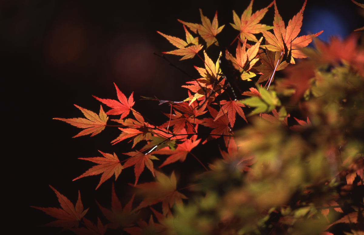 泉自然公園の紅葉 6