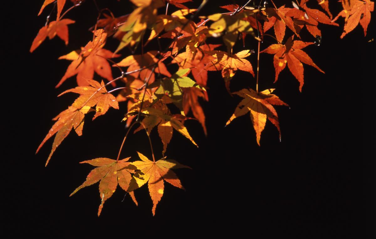泉自然公園の紅葉 7