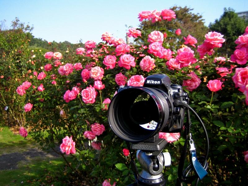 Reflex Nikkor 500mm F8
