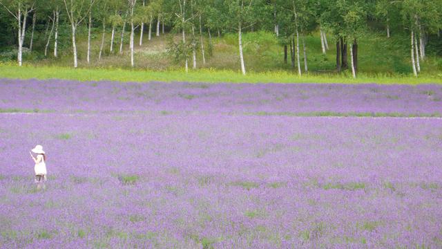 北海道の花 4