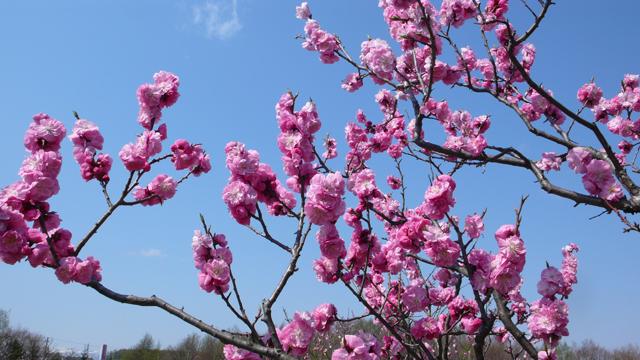 北海道の花 8