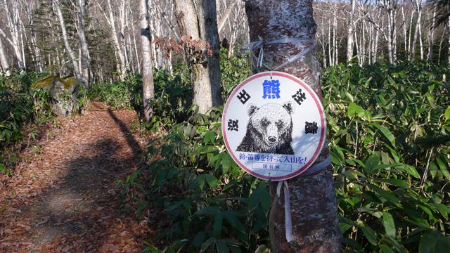 白樺の遊歩道にも熊