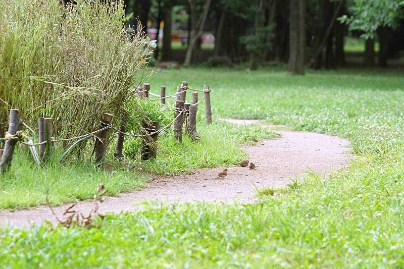 代々木公園 6