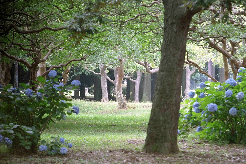 代々木公園 8