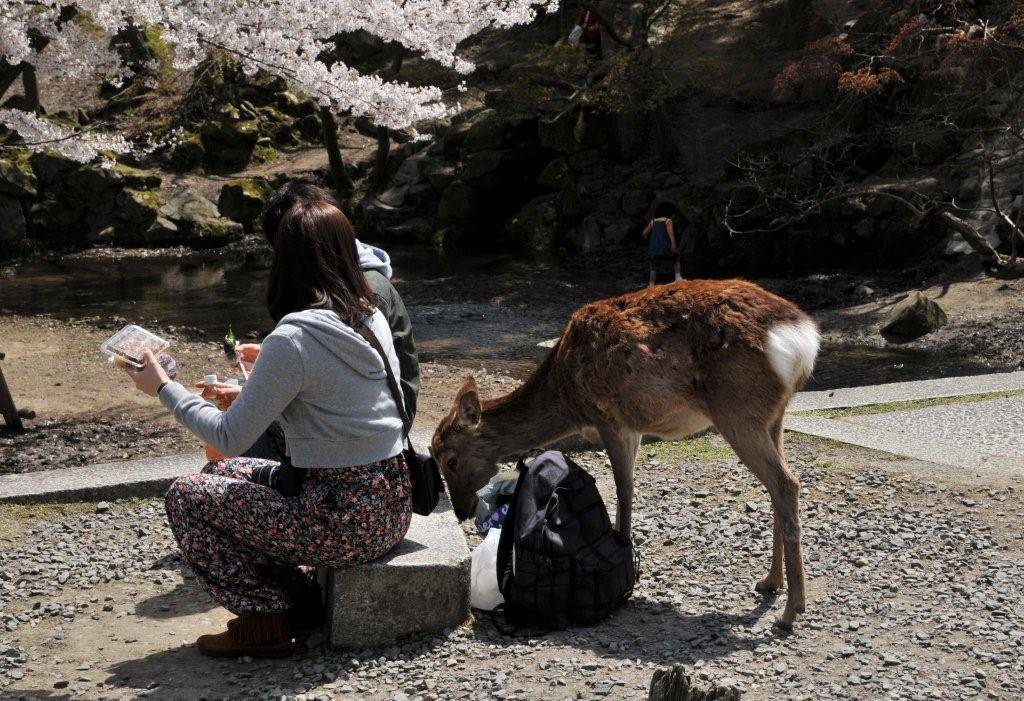 奈良 鹿天国 .jpg