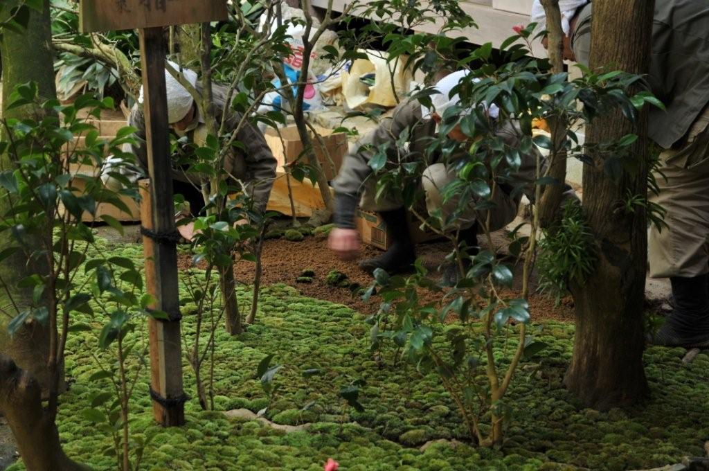龍安寺 苔の植付.jpg