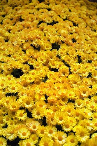 2007年11月11日 神代植物公園 3