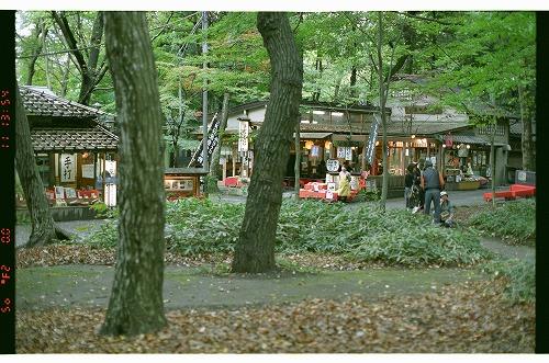 2007年11月11日 神代植物公園 19