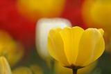 【♪咲いた、咲いた♪】