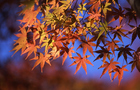 泉自然公園の紅葉 8