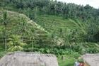 バリ島 5