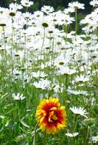北海道の花 2