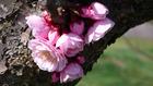 北海道の花 6