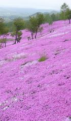 北海道の花 9