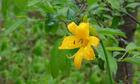北海道の花 12