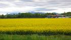 北海道の花 13