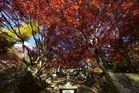 大山寺の紅葉