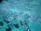 パンに群がってくる魚たち。.JPG