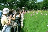 コスモスにカメラ 昭和記念公園