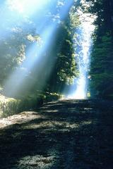 日光 朝8時 東照宮から二荒山神社への路