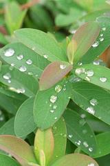 2007年11月11日 神代植物公園 13
