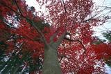 2007年11月17日 御岳 1