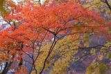 2007年11月17日 御岳 2