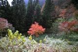 2007年11月17日 御岳 4