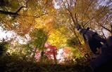 高尾山 さる園