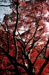 【赤と黒】