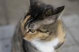 ネコ − 上野不忍池
