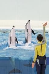 イルカの背伸び